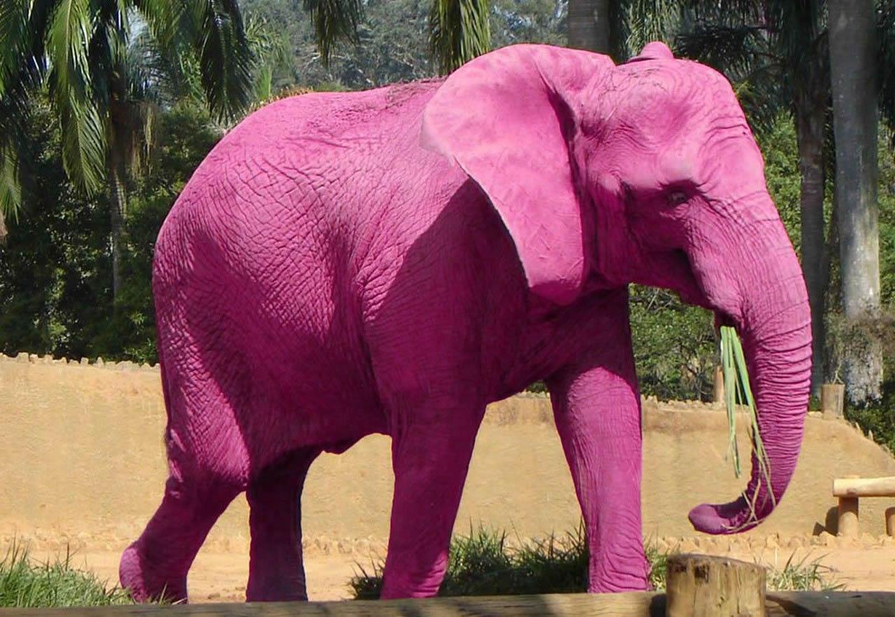 Розовые картинки приколы